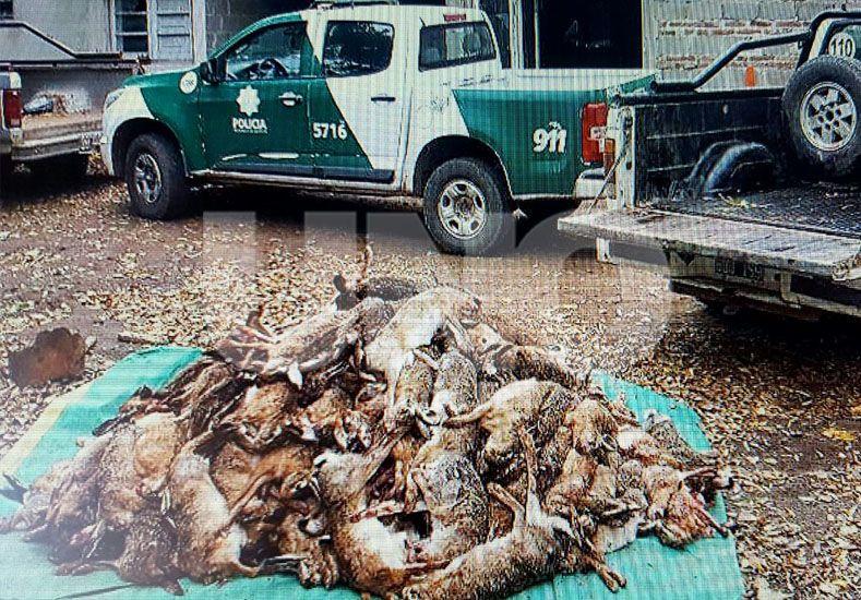 Secuestraron 218 liebres a cazador furtivo