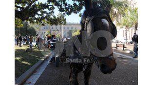 Alertas. La mayoría de los carreros fue a pie a Casa de Gobierno en defensa de la tracción a sangre / Foto: Juan Manuel Baialardo - Uno Santa Fe