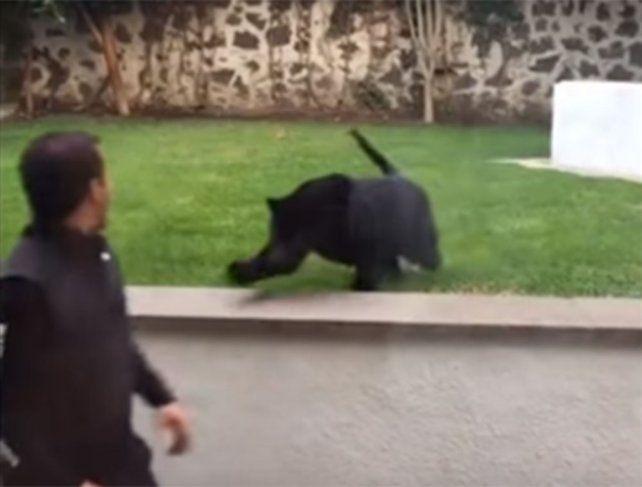 Video: le dio la espalda a una pantera y mirá lo que le pasó