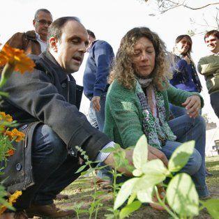 programa de reconstruccion: arboles frutales perfuman el patio de un mundo especial
