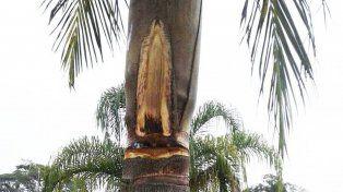 ¿La Virgen volvió a aparecer en el cielo?