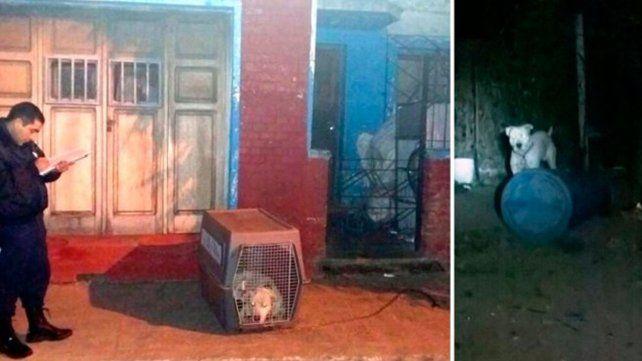 San Luis: un dogo mató a un nene de un año