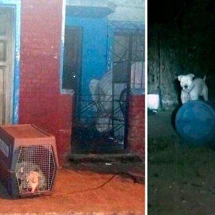 san luis: un dogo mato a un nene de un ano
