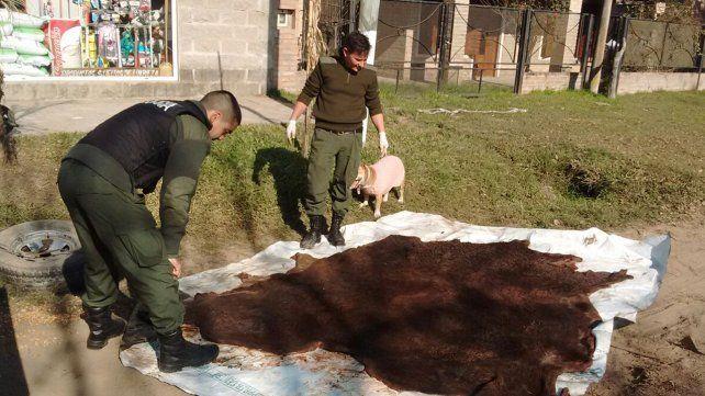 Realizaron procedimientos contra la caza furtiva y robo de animales