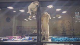 Escape de ternura: un gato sale en busca de su amigo perruno