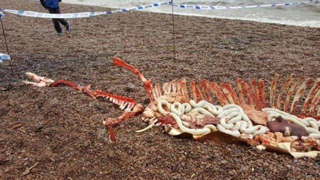 Aseguran haber encontrado restos del monstruo del Lago Ness