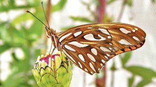 Un aficionado quiere crear una granja de mariposas en Santa Fe