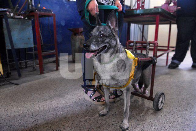 Ejemplo. Zafira es una de las primeras perritas que fue asistida por el proyecto