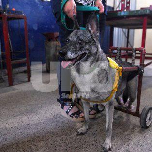Ejemplo. Zafira es una de las primeras perritas que fue asistida por el proyecto, la cual se convirtió en mascota del grupo.