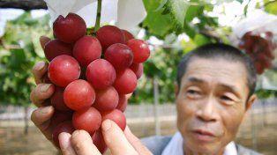 Vendieron un racimo de uvas por 10.000 euros en Japón