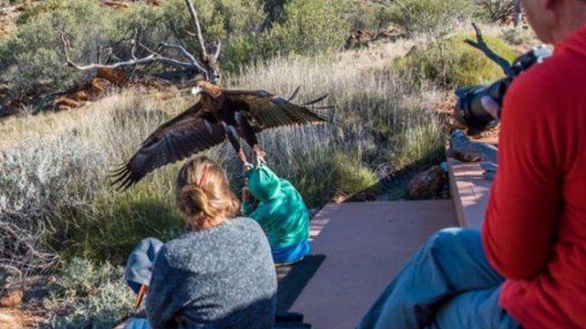 Un águila trató de llevarse a un niño