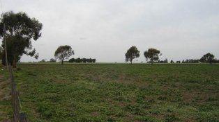 Falseaban ventas de campos desde oficinas públicas