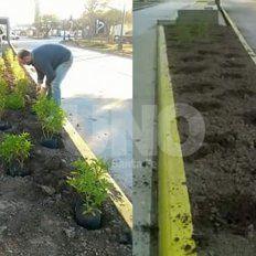 No duraron ni un día: se robaron las plantas de las paradas del Metrofé