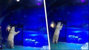 El oso polar más triste del mundo vive en un centro comercial