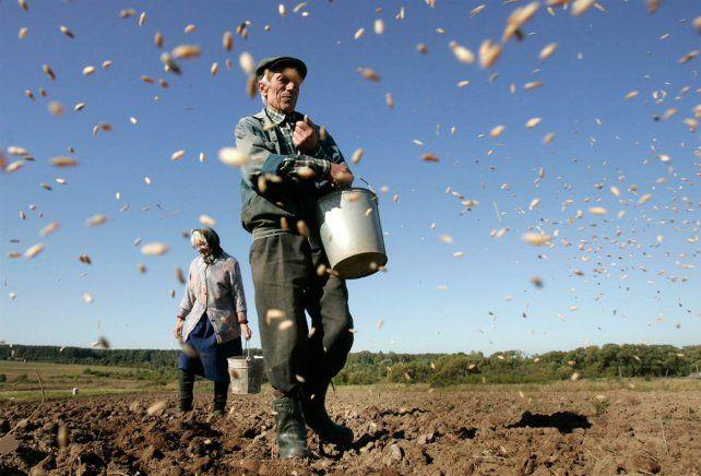 El área sembrada de trigo creció el 34,4% y se prevé una mayor inversión
