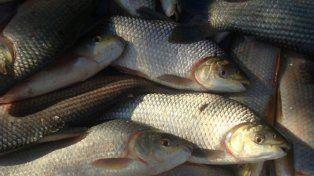 Frigoríficos. Pescadores pretenden definir el precio del sábalo en una mesa con los empresarios.
