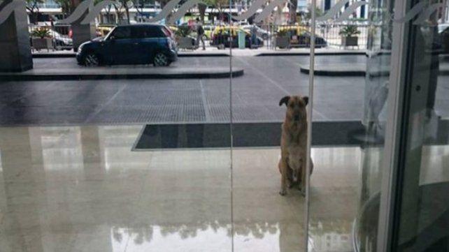 Un perro logró que una azafata se lo lleve a vivir a Alemania
