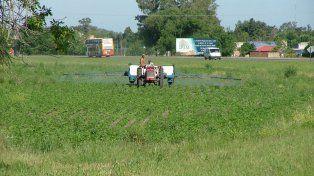 Análisis. Para estudiar las características fisiológicas que le confieren una sensibilidad diferencial al herbicida
