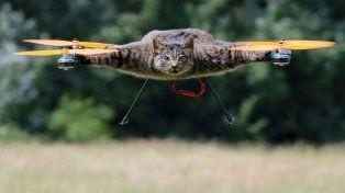 Usa animales muertos para hacer drones