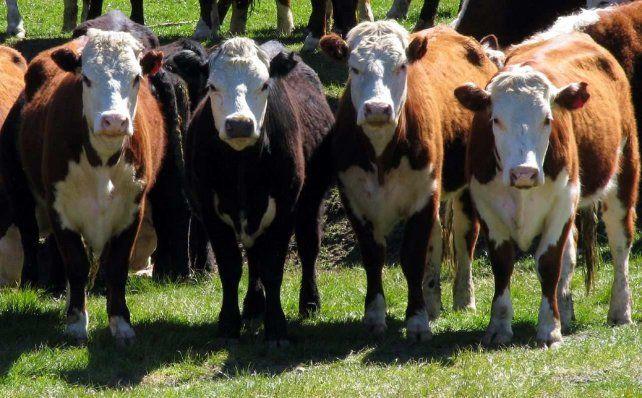 Científicos argentinos eliminaron el gen de la vaca loca