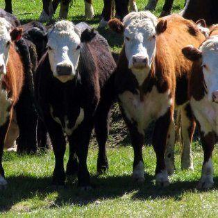 cientificos argentinos eliminaron el gen de la vaca loca
