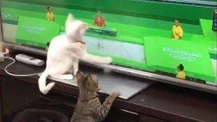 Estos gatos también siguen con fervor los Juegos Olímpicos