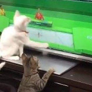 estos gatos tambien siguen con fervor los juegos olimpicos