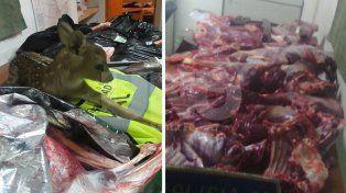 Secuestraron un ciervo Axis cazado y 70 kilos de carne de la misma especie a un depredador