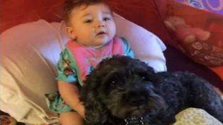 Polo, el perro que murió al salvar a una bebé de un incendio
