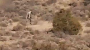 Las aterradoras imágenes de una extraña criatura en un desierto causan sensación en las redes