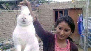 Pinpon, el conejo que se escapaba de casa para consumir marihuana