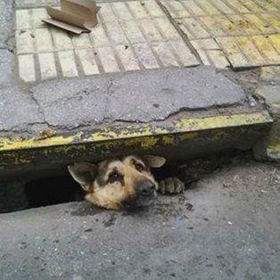Conmovedor rescate a un perro atrapado en una alcantarilla