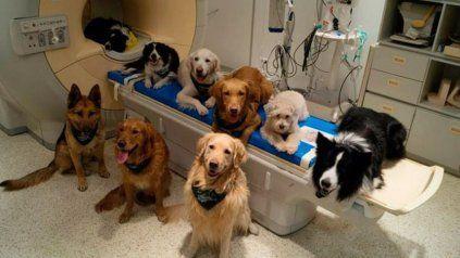Los perros entienden el lenguaje humano