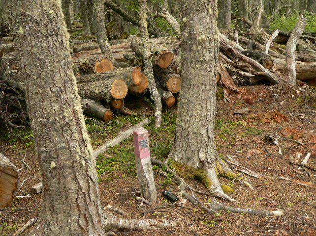 Talaron árboles en un parque nacional argentino y podrían ir dos años presos