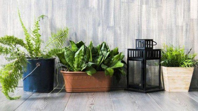 Las sorprendentes plantas que mejoran la calidad del aire en casa