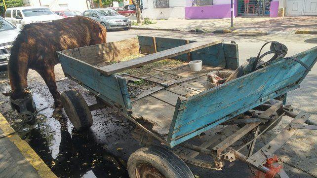 Menores detenidos cuando manejaban un carro tirado por un caballo con signos de maltrato por Bulevar
