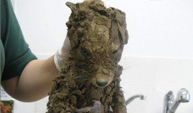 Encuentran misterioso animal lleno de barro y al limpiarlo, descubren algo asombroso