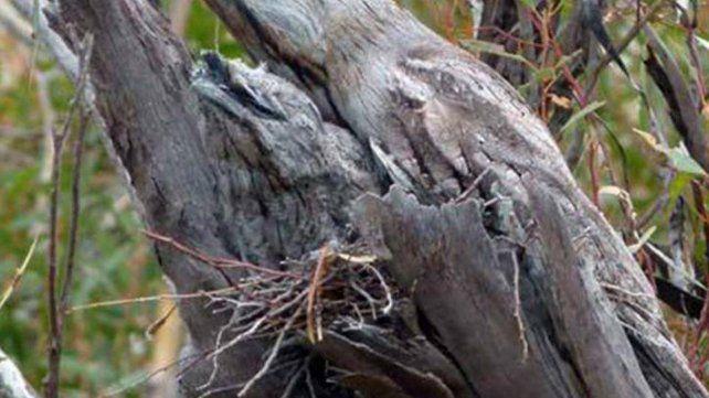 ¿Podés encontrar a los dos pájaros escondidos en esta foto?