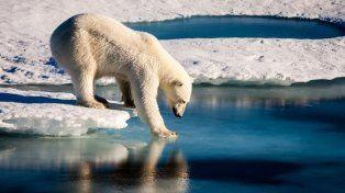 El calentamiento global, el miedo del oso polar y una foto que se volvió viral