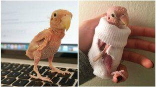 El pájaro sin plumas del que todos hablan en las redes sociales