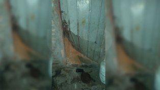 Los delincuentes ingresaron por una puerta trasera de la vivienda.