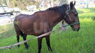 Rescataron a un caballo que arrastraba un auto en la zona de Recreo