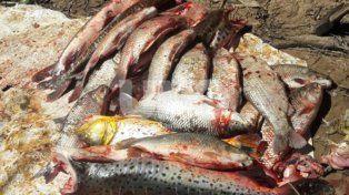 Secuestraron redes de pesca, armas y decomisaron especies ictícolas depredadas
