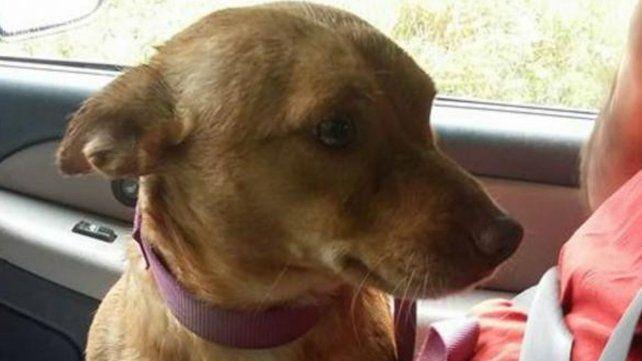 Una carta sobre el abandono de las mascotas que se volvió viral