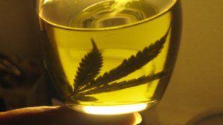 Buscan autorizar el uso medicinal del aceite de Cannabis