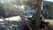 Robaron una camioneta, chocaron contra un árbol y se dieron a la fuga