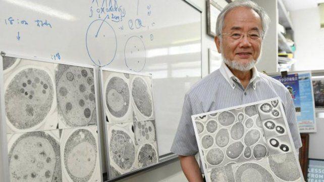 El científico japonés Yoshinori Ohsumi.