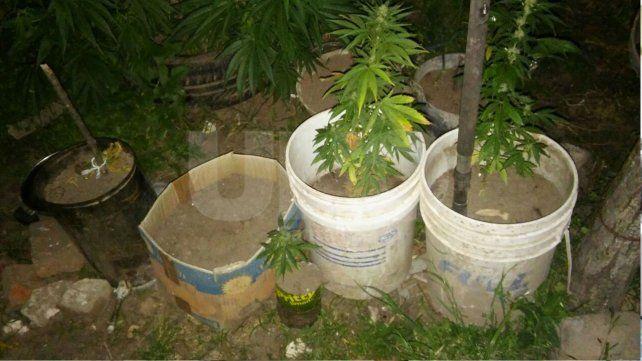 Secuestraron una decena de plantas de marihuana en Ángel Gallardo