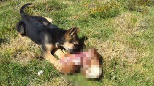 Murió de infarto y se lo comieron sus perros
