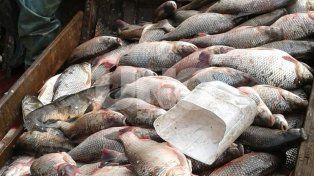 Secuestraron 600 sábalos y redes a tres depredadores de la fauna ictícola